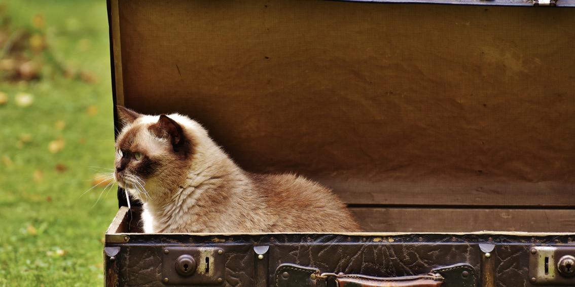 10 consejos para viajar con tu mascota